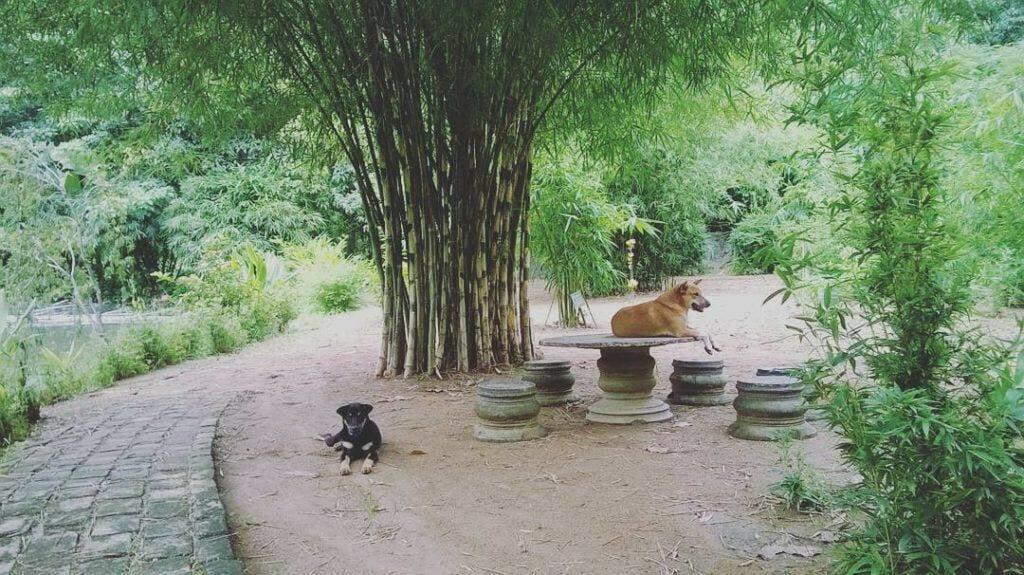 Sơn trà tịnh viên đà nẵng và những chú chó