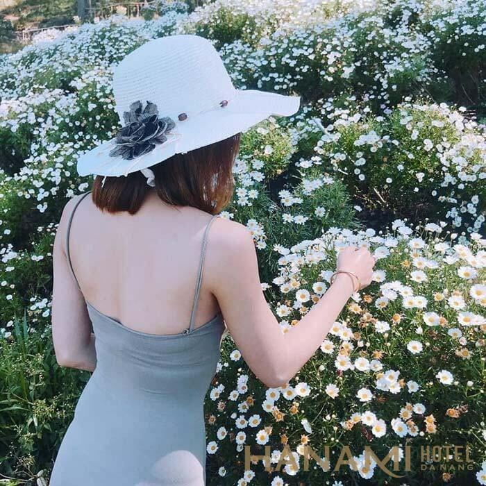 bạn nữ chụp hình sống ảo tại vườn cúc họa mi ở Đà Nẵng