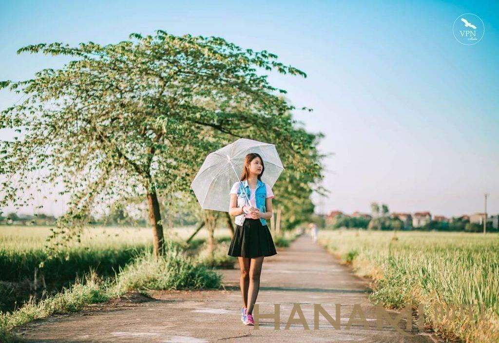 cây cô đơn giữa cánh đồng xanh quảng nam